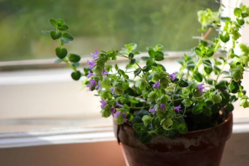Gartenakademie-Blumen 2