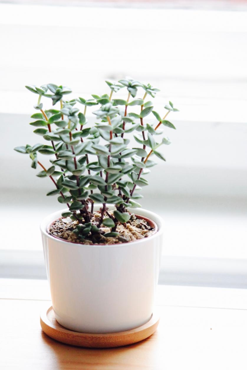 Die sch nsten und pflegeleichtesten zimmerpflanzen inspirier mich - Robuste zimmerpflanze ...