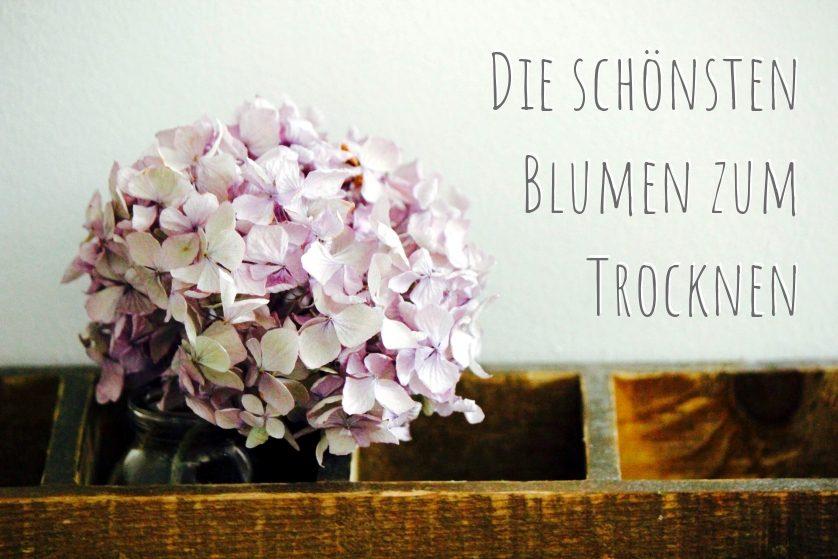 Trockene-Blumen
